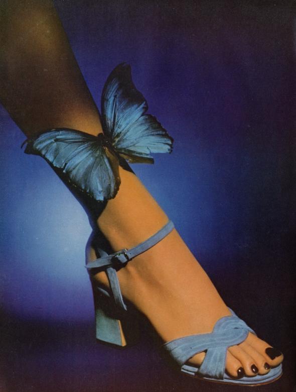 rayne butterfly arrowsmith